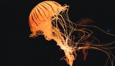Puntura di medusa cosa fare e rimedi